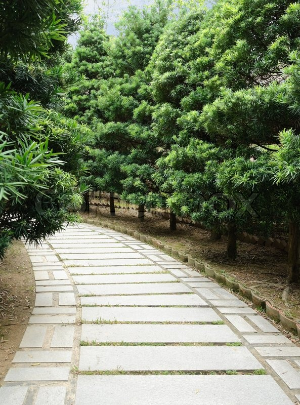 Stone pathway with pine tree in both side stock photo colourbox - Impressive house with tranquil environment to get total relaxation ...
