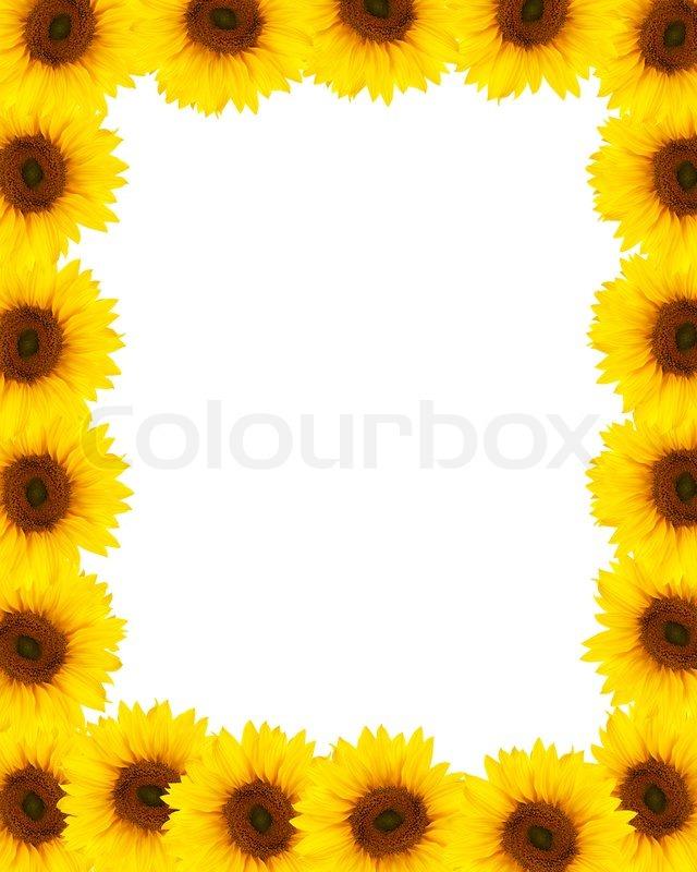 Sunflower frame background | Stock Photo | Colourbox