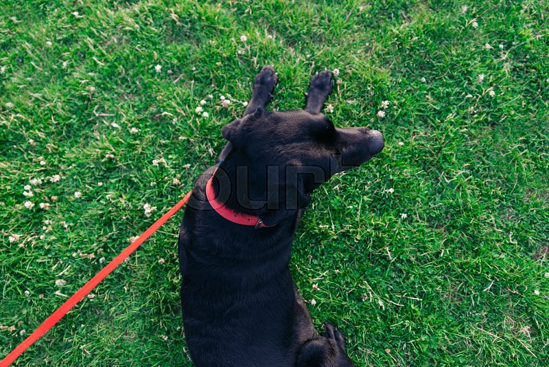 Resting dog with its owner in the park, stock photo