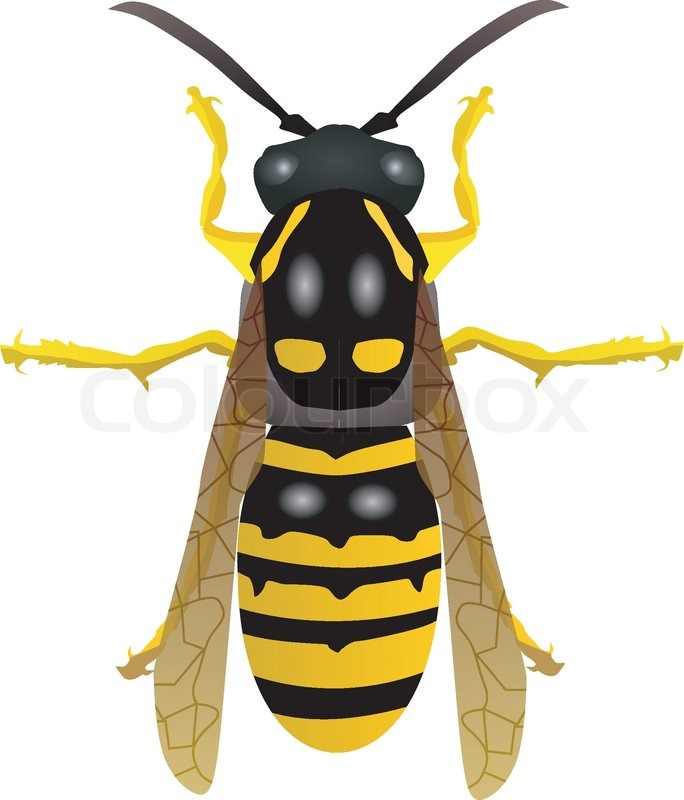 Yellow jacket mascot. Vector illustration with simple gradients. All ...