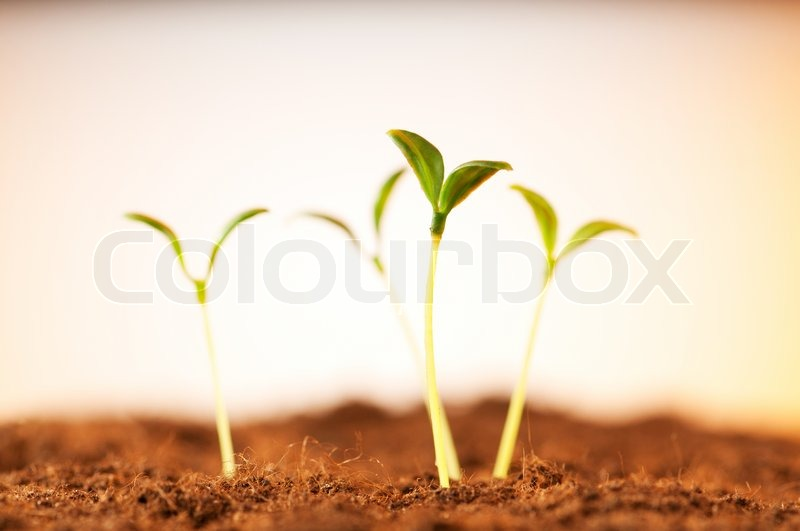Green seedling illustrating concept of new life, stock photo