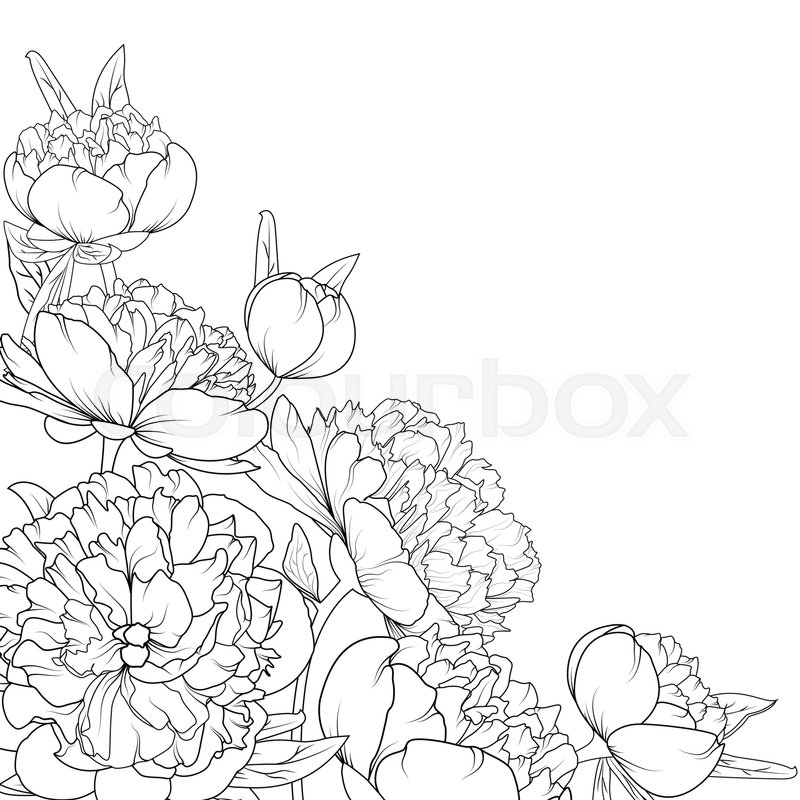 Peony rose garden spring summer flowers black and white detailed peony rose garden spring summer flowers black and white detailed outline sketch drawing corner border frame decoration element composition mightylinksfo