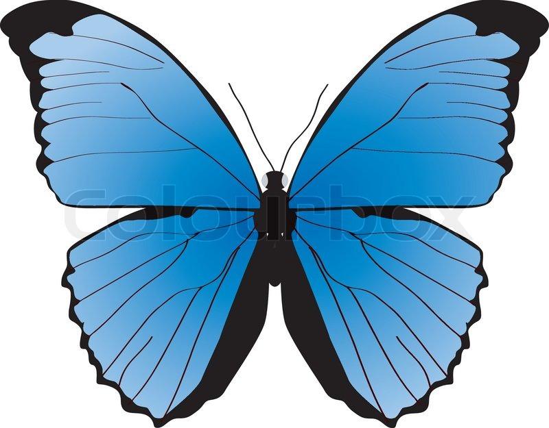 Der Blaue Schmetterling Auf Einem Wei 223 En Hintergrund