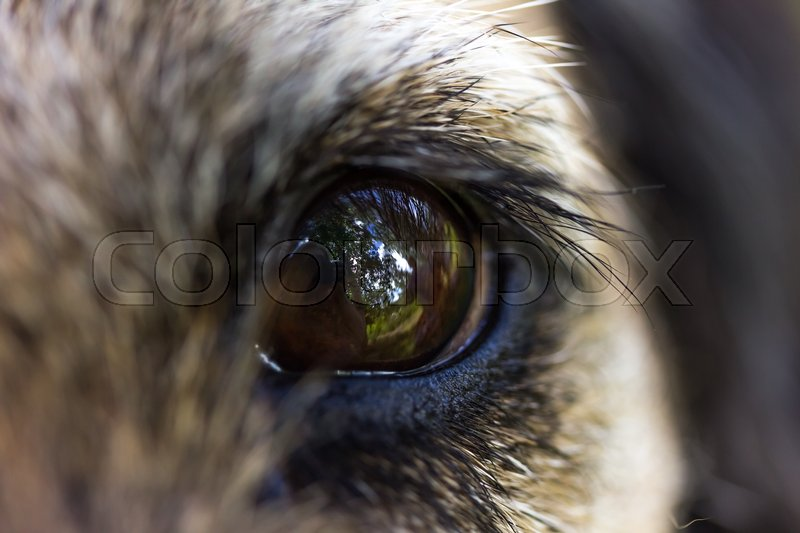 Dog eye close up with reflections, stock photo