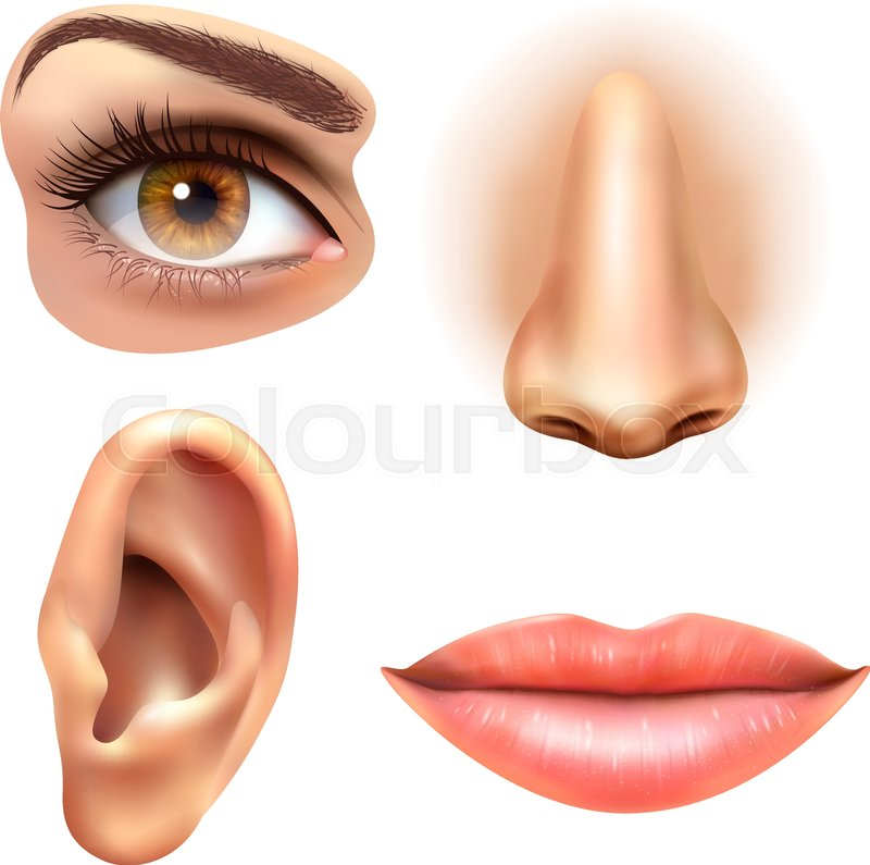 Human face parts 4 sense organs icons square collection of eye nose ...