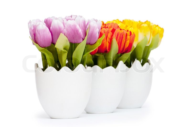 bunte blumen tulpe im wei en topf stock foto colourbox. Black Bedroom Furniture Sets. Home Design Ideas