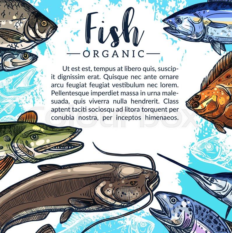 Fishing Poster For Fresh Fish Fishery Or Seafood Market Vector Design Of Fisherman Big Catch Salmon Pike And Herring Sheatfish Carp Tuna