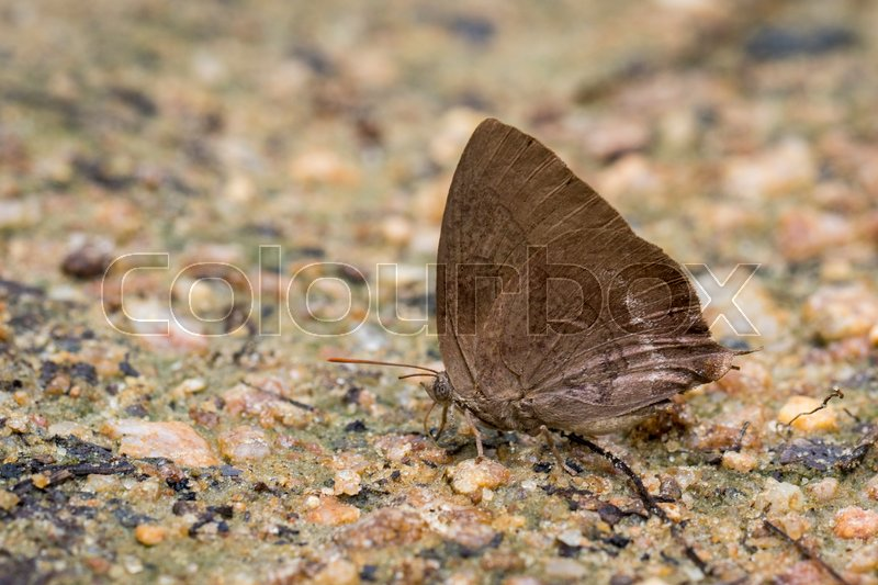 Image of brown butterfly on the ground. Insect Animal. , stock photo