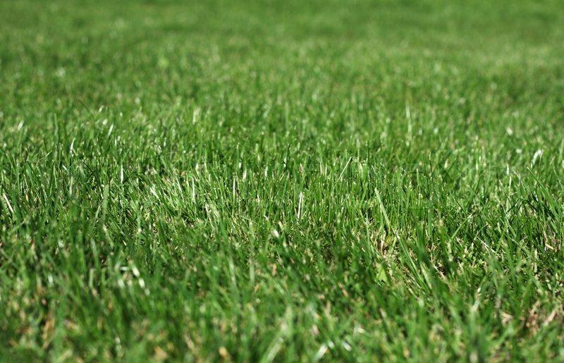grass macro photography - photo #3