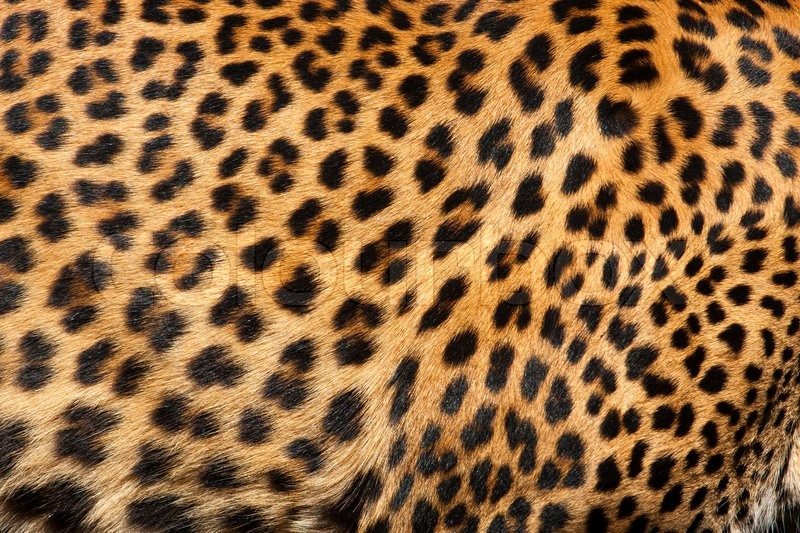 Cheetah Fur Close Up Close up patter...