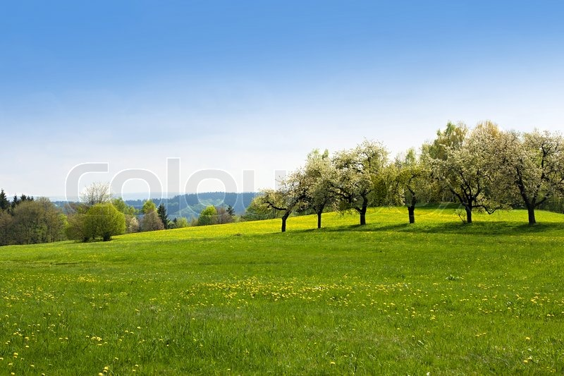 grass field background. Green Grass Field Landscape With Blue Sky In The Background | Stock Photo Colourbox B