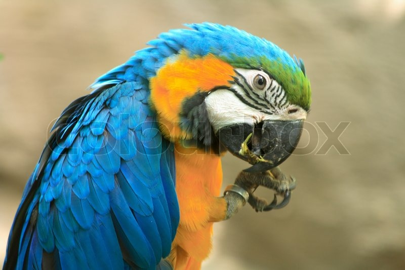 very nice parrot in the prague zoo stock photo colourbox