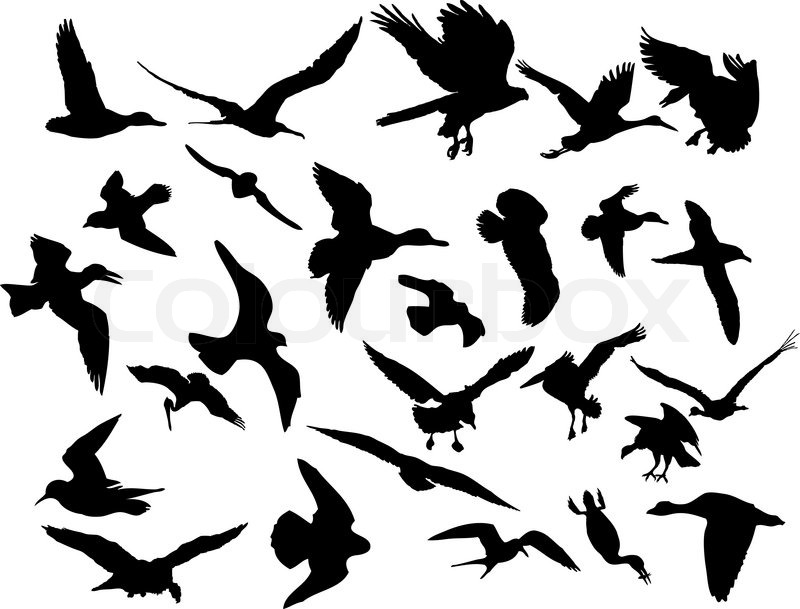 Vector illustrations black silhouettes birds on white for Pared pintada con circulos