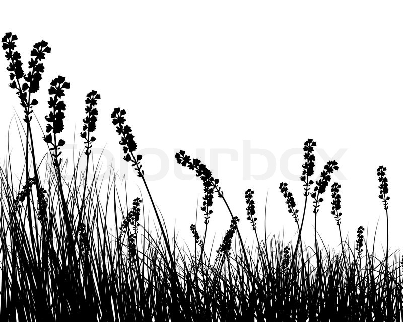 Vector grass silhouettes background for design use