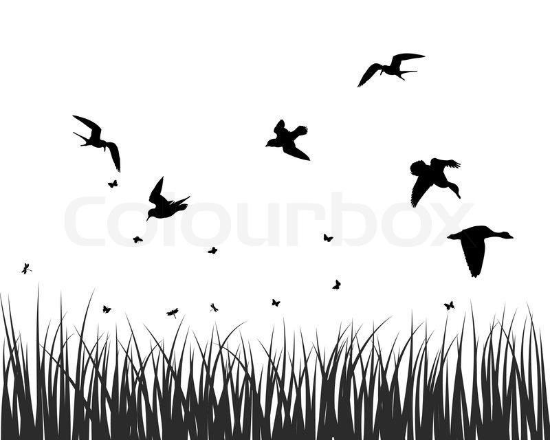 Vögel Am Himmel Zeichnen Anadolufotografdernegi