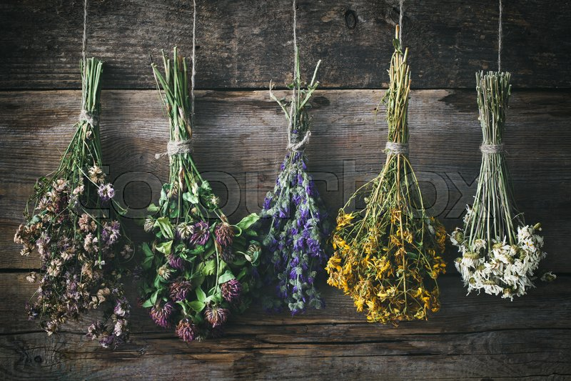 Hanging bunches of medicinal herbs and flowers. Herbal medicine. Retro toned, stock photo
