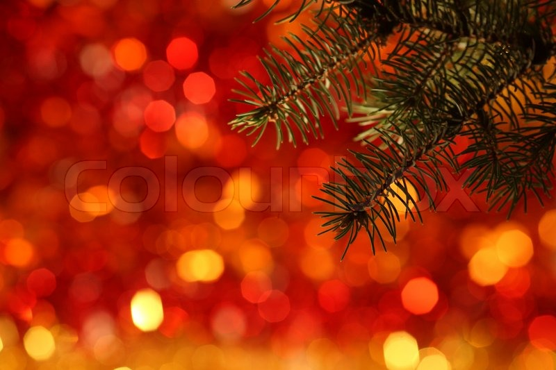 branch of christmas tree against red light background stock photo colourbox