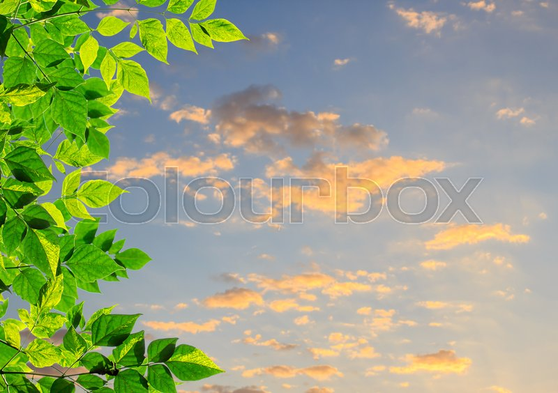 Green leaves with blurred sky and sunlight background.Copy space for design, stock photo