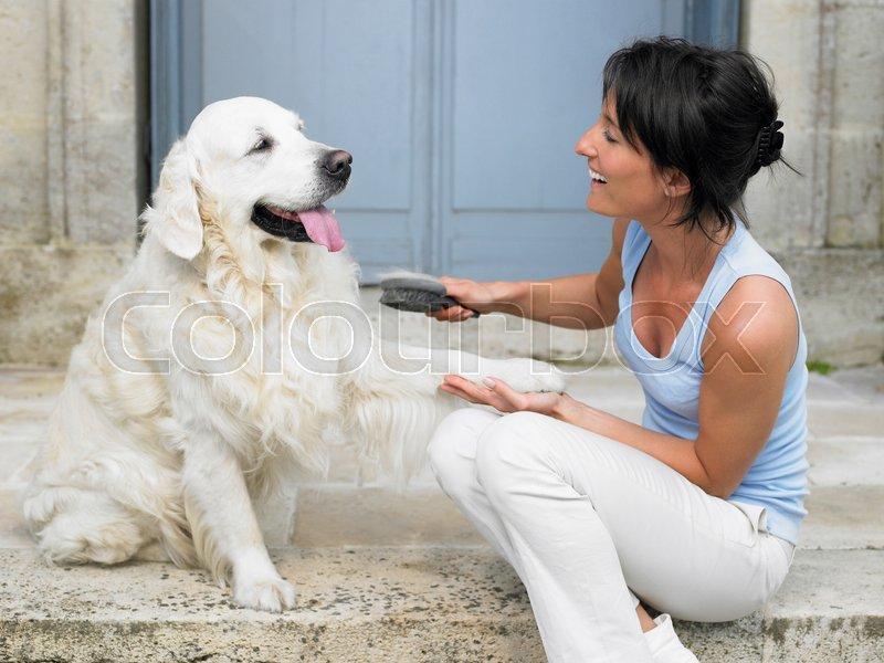 Woman brushing her dog, stock photo