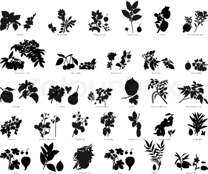 Great Collection Of Different Garden Vector Silhouettes Of Plants | Stock Vector  | Colourbox