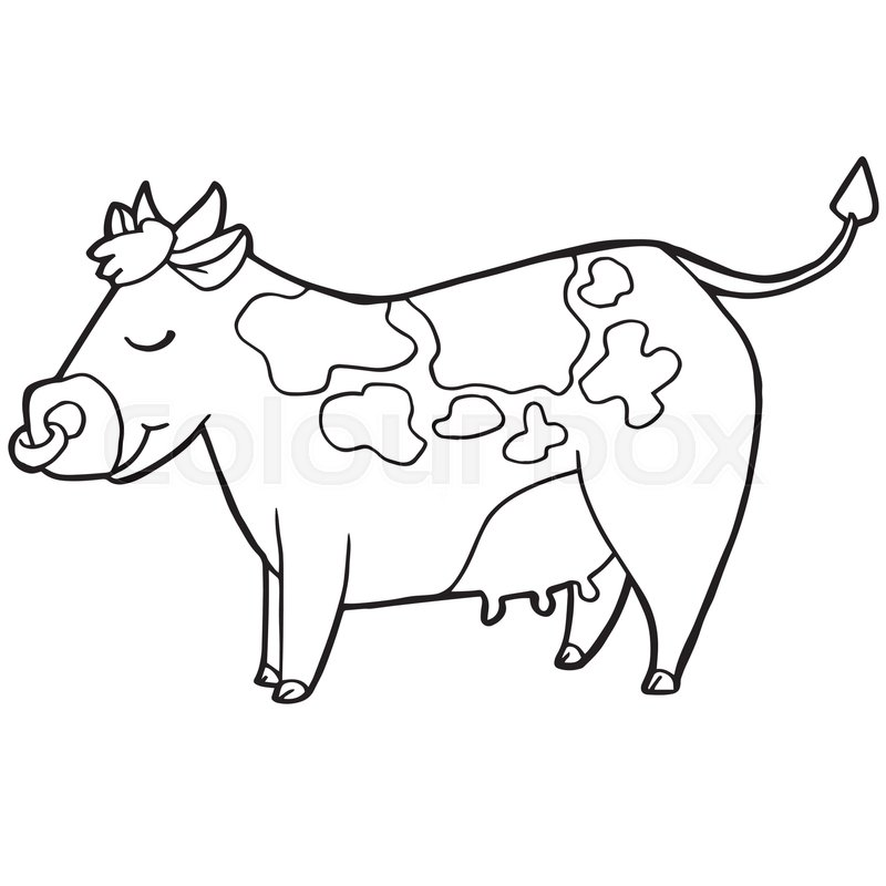 cartoon cute cattle or cow coloring page vector illustration stock