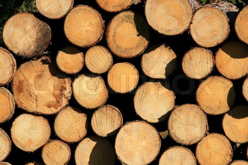 træ tapet Tømmer , brænde , træ , baggrund , tapet , ring, brændstof , bark  træ tapet