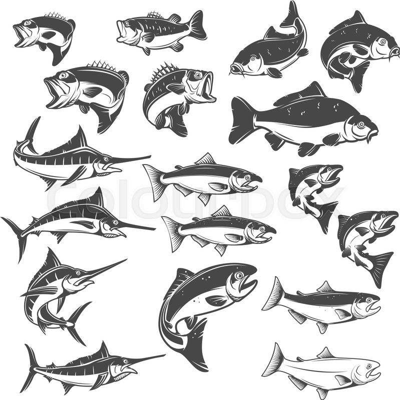 fish illustrations on white