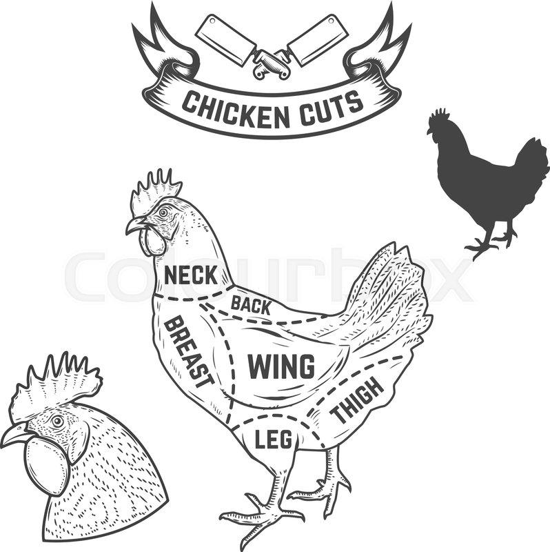 chicken butcher diagram  design