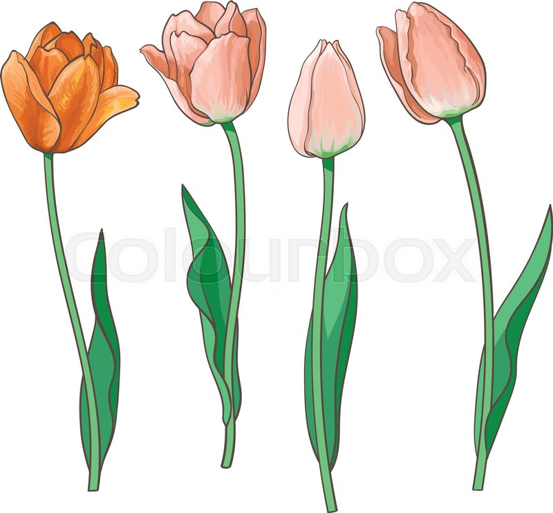 Hand drawn set of side view red, orange open and closed tulip flower ...