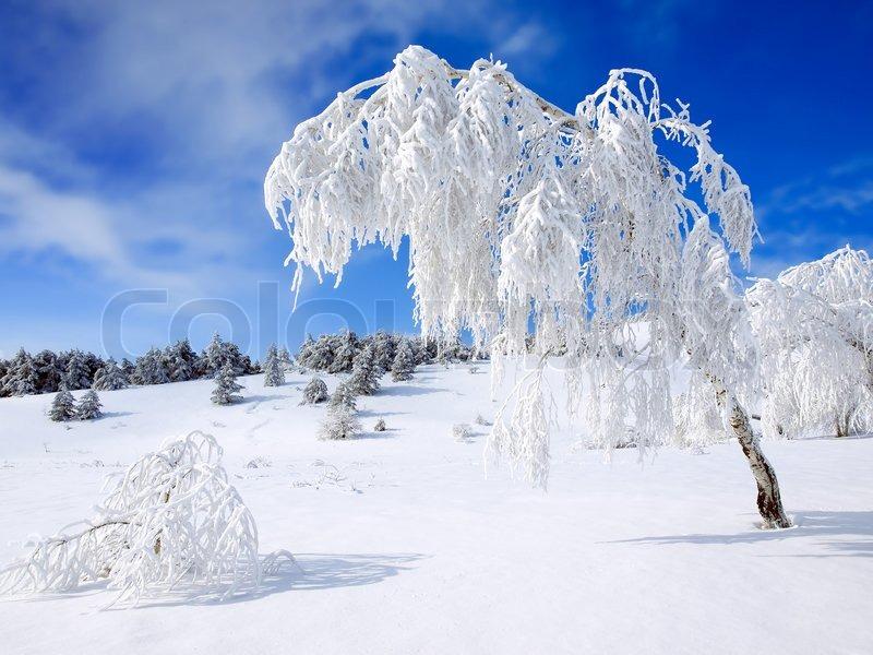 Winterliche landschaft mit schneebedeckten b umen stockfoto colourbox - Winterliche bilder kostenlos ...