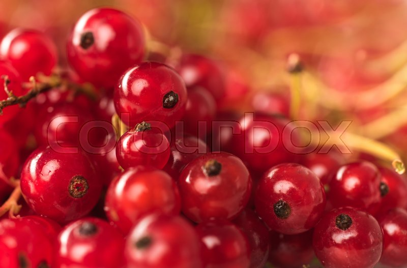 Stock image of 'Picture of Red currant berries close up. Macro.'