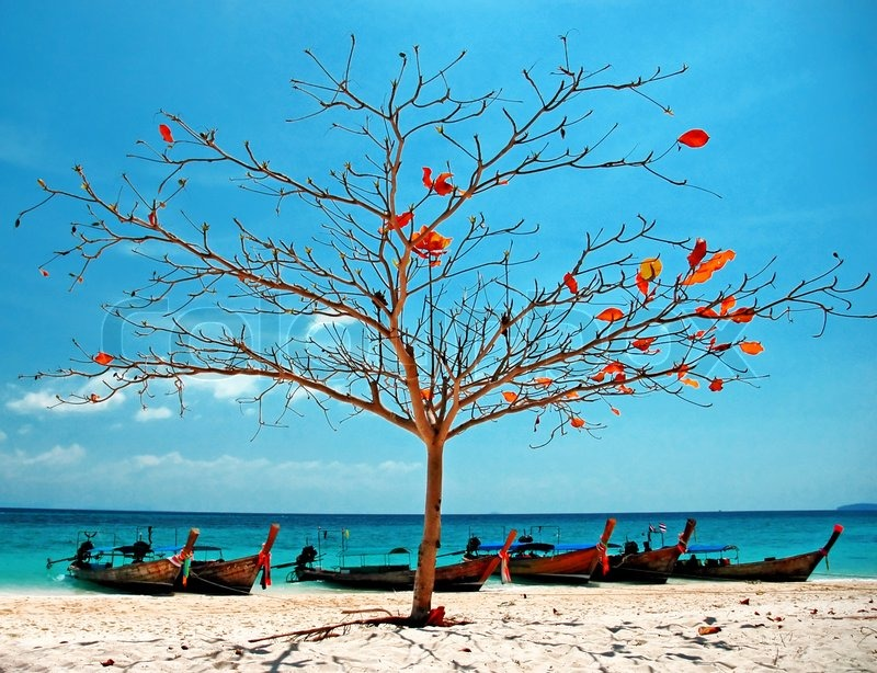 Christmas Tree Manufacturer Thailand : A tropical beach with tree and boats in bamboo island