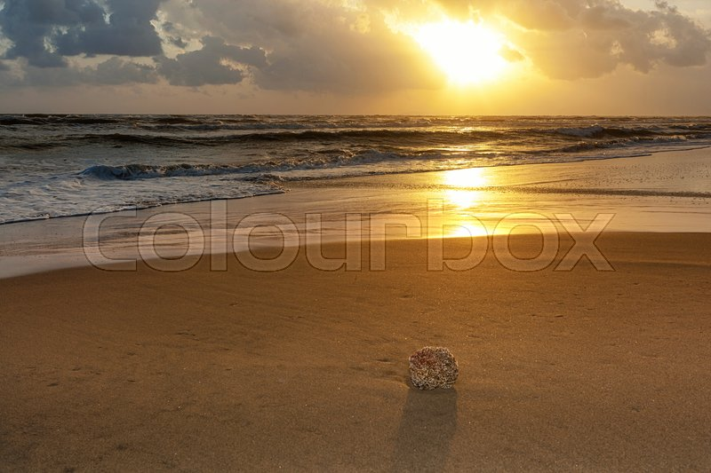 Stock image of 'Closeup of beach with sea sponge on the shore at sunset.'