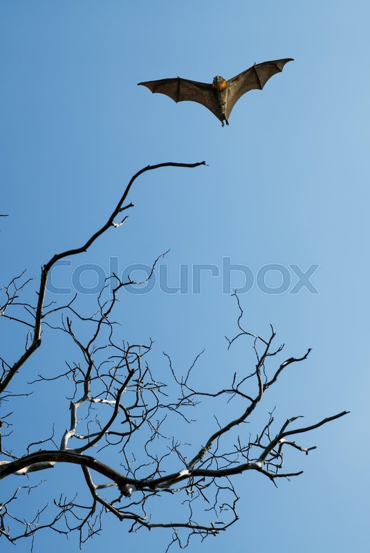 Stock image of 'Halloween background with flying bat over blue sky background'