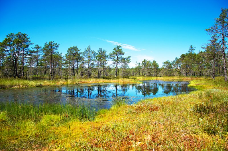 Stock image of 'Viru Raba swamp lake in Estonia.'