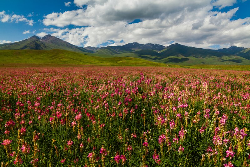 Stock image of 'Blooming valley with green mountains. Kyrgyzstan, summer'