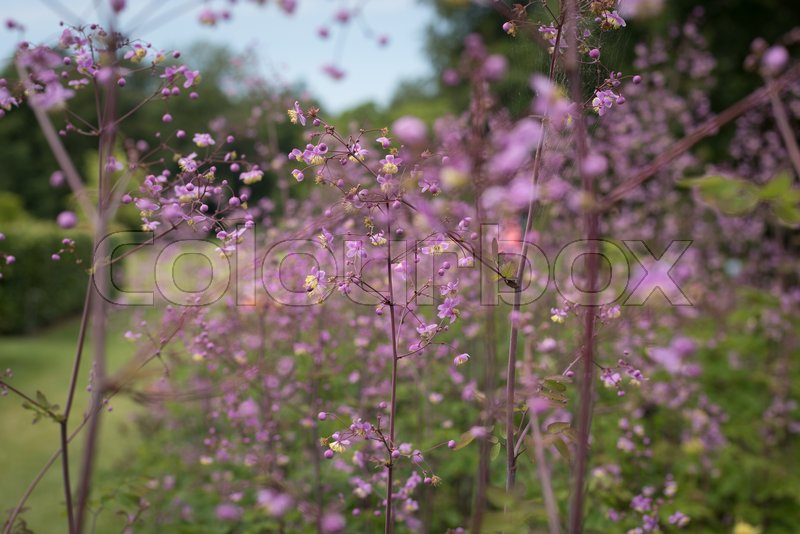 Stock image of 'Flowers in the private part of the garden at Fredensborg castle'