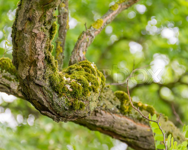 Stock image of 'mossy overgrown branch detail in natural blurry green back'