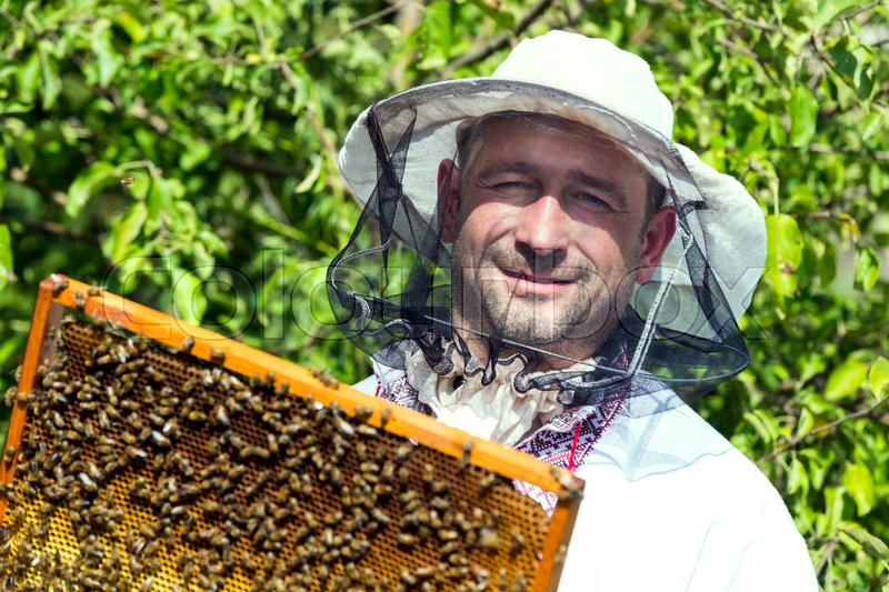 Stock image of 'A man works in an apiary collecting bee honey'