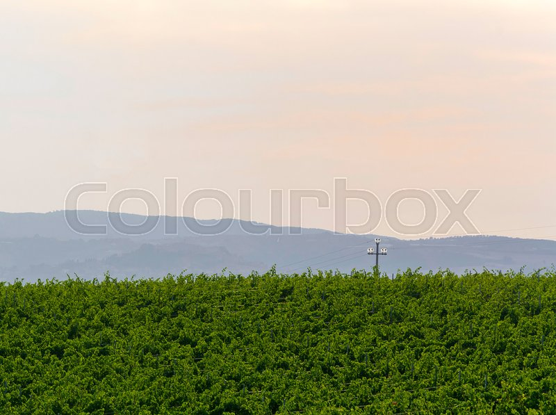 Stock image of 'green field in italian countryside with an electric trellis'