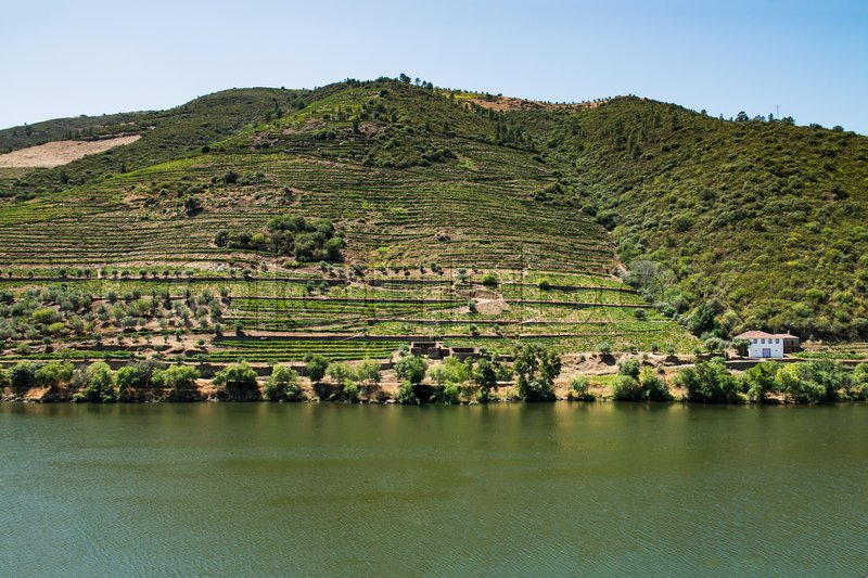 Stock image of 'Point of view shot from historic train in Douro region, Portugal. Features a wide view of terraced vineyards in Douro Valley, Alto Douro Wine Region in northern Portugal, officially designated by UNESCO as World Heritage Site.'
