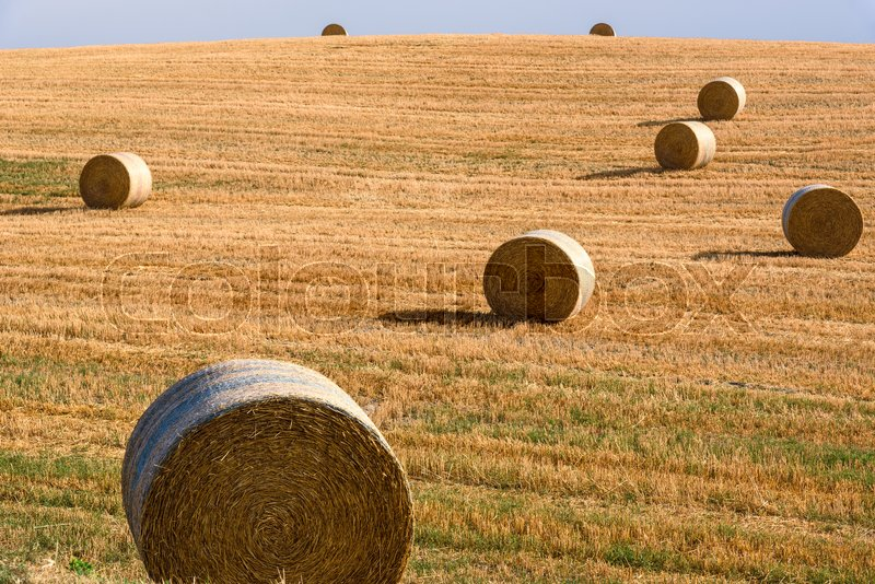 Stock image of 'View of a summer day in the Italian rural landscape.'