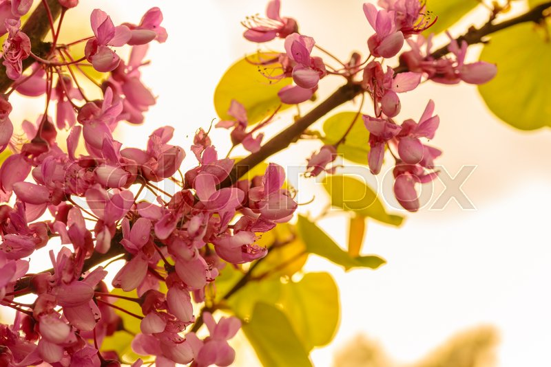 Stock image of 'Purple flower on a tree'