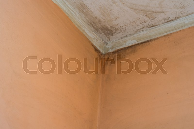 Stock image of ' mold in the old room wall .'