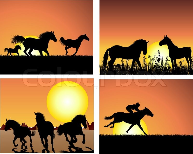 horses running in sunset