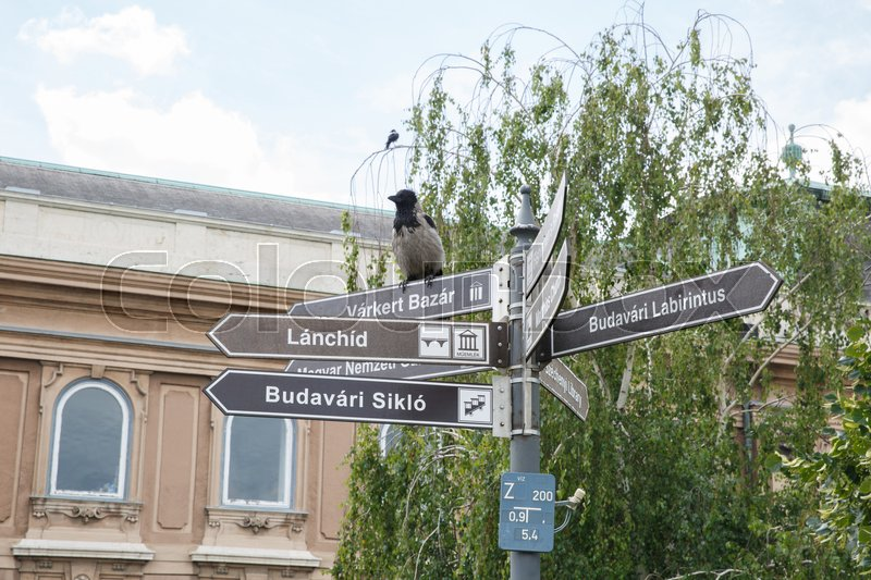 Stock image of 'Information sign and a gray crow near the Presidential Palace in Budapest. Hungary '