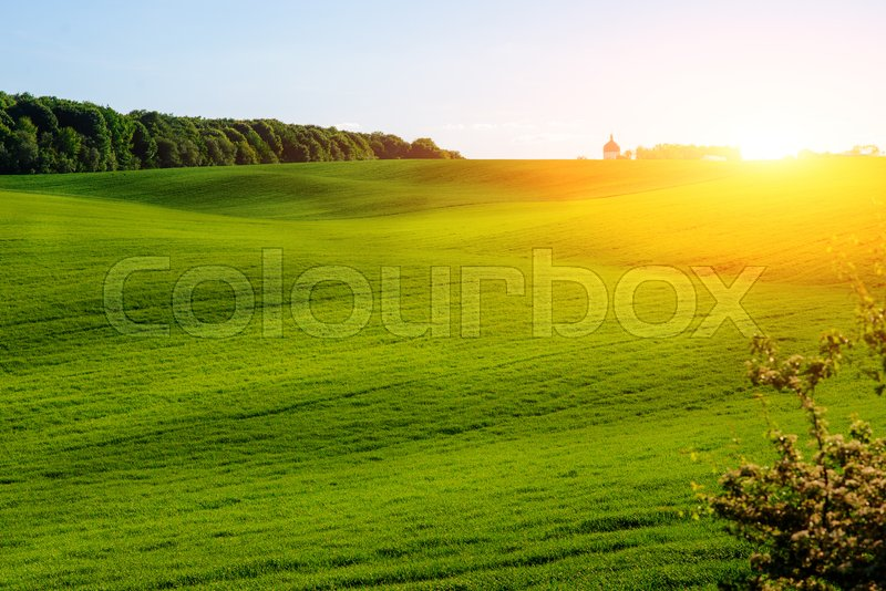 Stock image of 'Morning landscape with green field, traces of tractor in sun rays.'