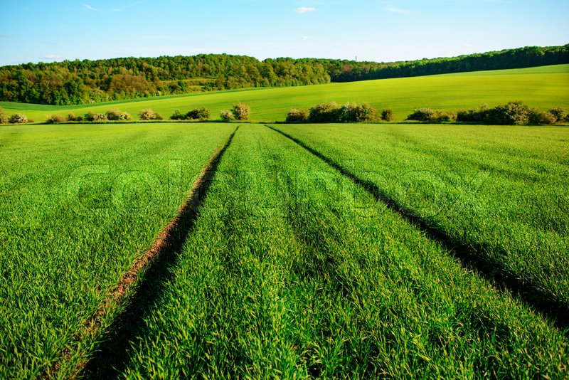 Stock image of 'A green field, and a small forest under a blue sky.'