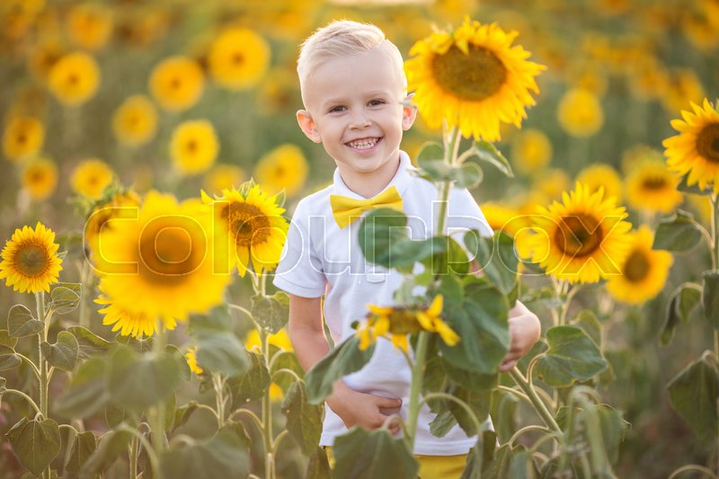 Stock image of 'Pretty child boy is wearing white shirt in yellow garden of sunflowers'
