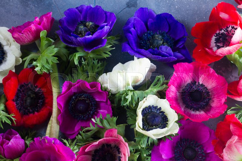 Stock image of 'Fresh colorful fresh Anemones flowers pattern close up background'